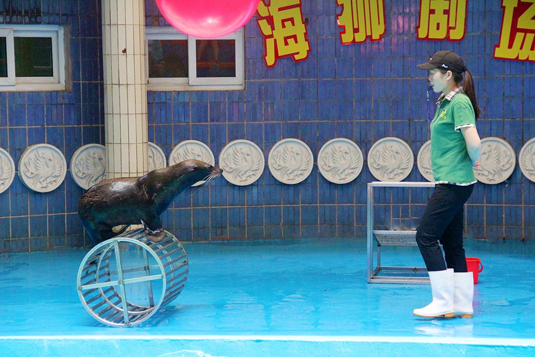 中山市紫马岭动物园_才通国际人才网_job001.cn